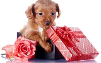 Виды подарков