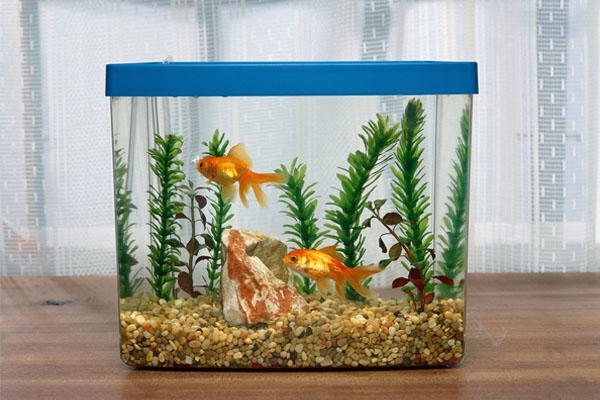 аквариум в подарок