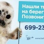 Петербург отказался помогать тюленям