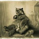 Google объявил кастинг котов для чтений «Мастера и Маргариты»
