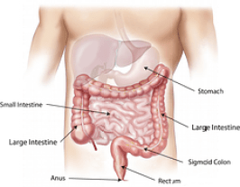 abdomen-digestion process