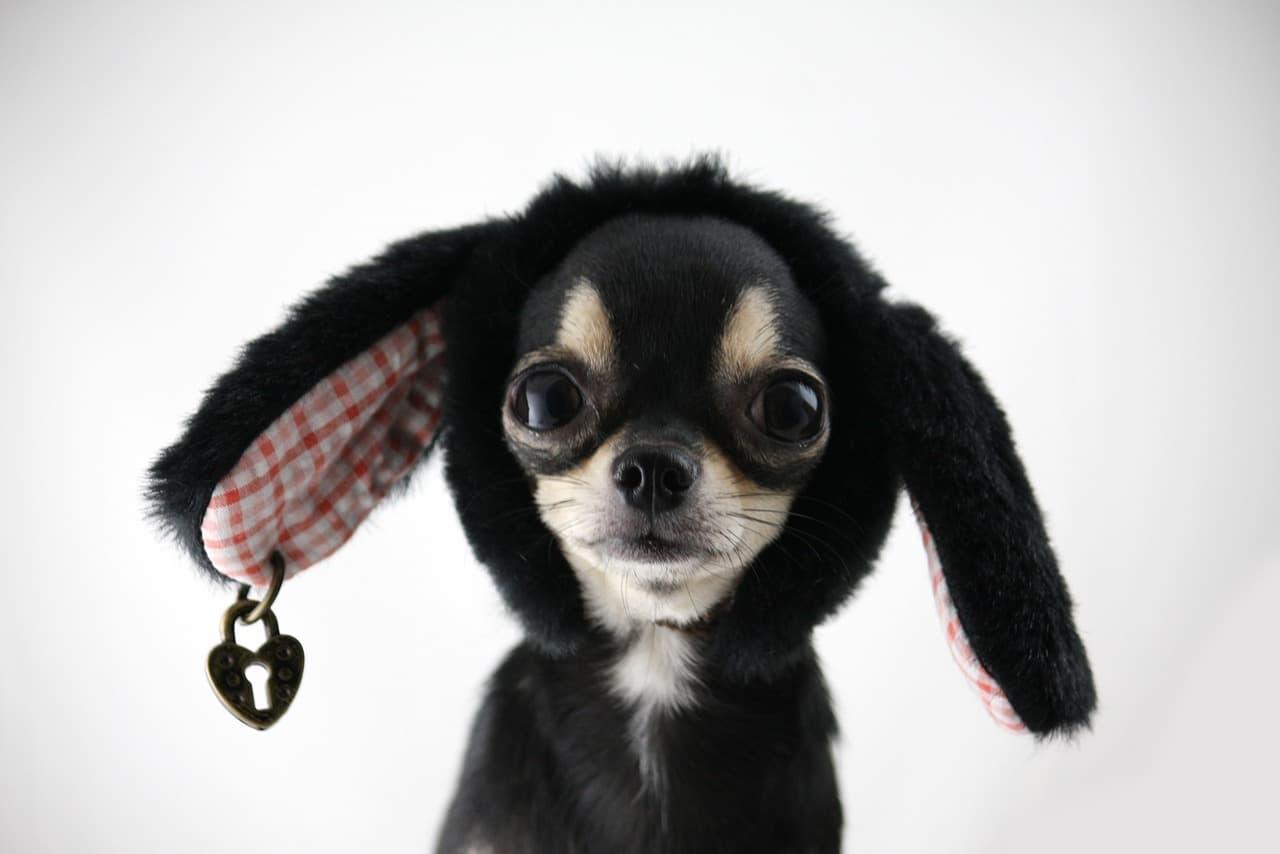ペットホテルの質の差?】飼い主としてどんな質を求めますか?