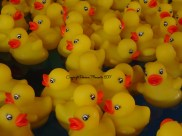 walibi peche au canard
