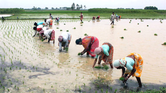 Commerce ministry plans workshops in different states to implement agri-export policy