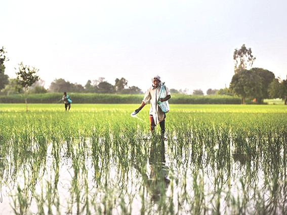 Boost for farmers: RBI raises collateral-free agri loan limit to Rs 1.6 lakh