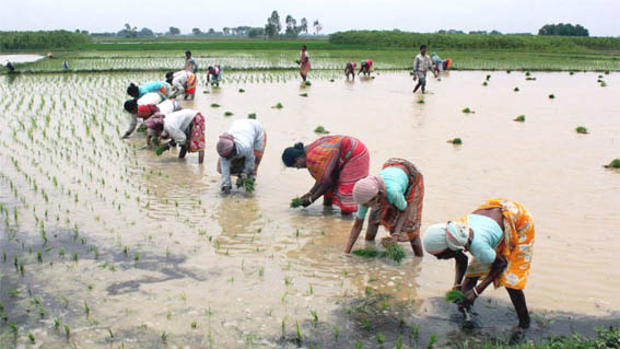 Nabard sees cash doles to farmers having larger impact