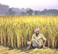 Govt plans to tweak PMFBY; to make crop insurance voluntary to all farmers