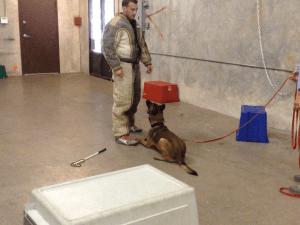 Guard Dog Training Austin Texas