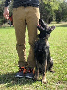 dog training Austin