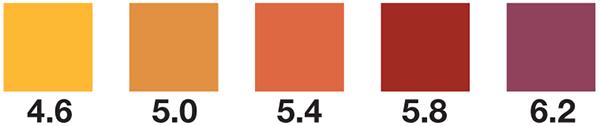 beer pH test strip, beer pH, pH test strip, pH 4.6-6.2, pH 4.6-6.2 test strip