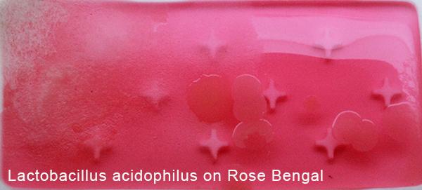 Lactobacillus acidophilus on Rose Bengal