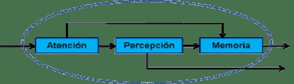 Figura 3. Componente Atención – Percepción – Memoria.