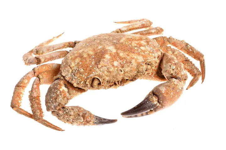 Foods to Avoid Giving Your Baby During the First Year: Shellfish