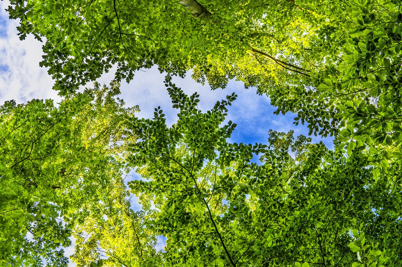 Currently, there are two accepted labels for certified timber: Sodra To Offer Fsc To Its Members Preferred By Nature Global