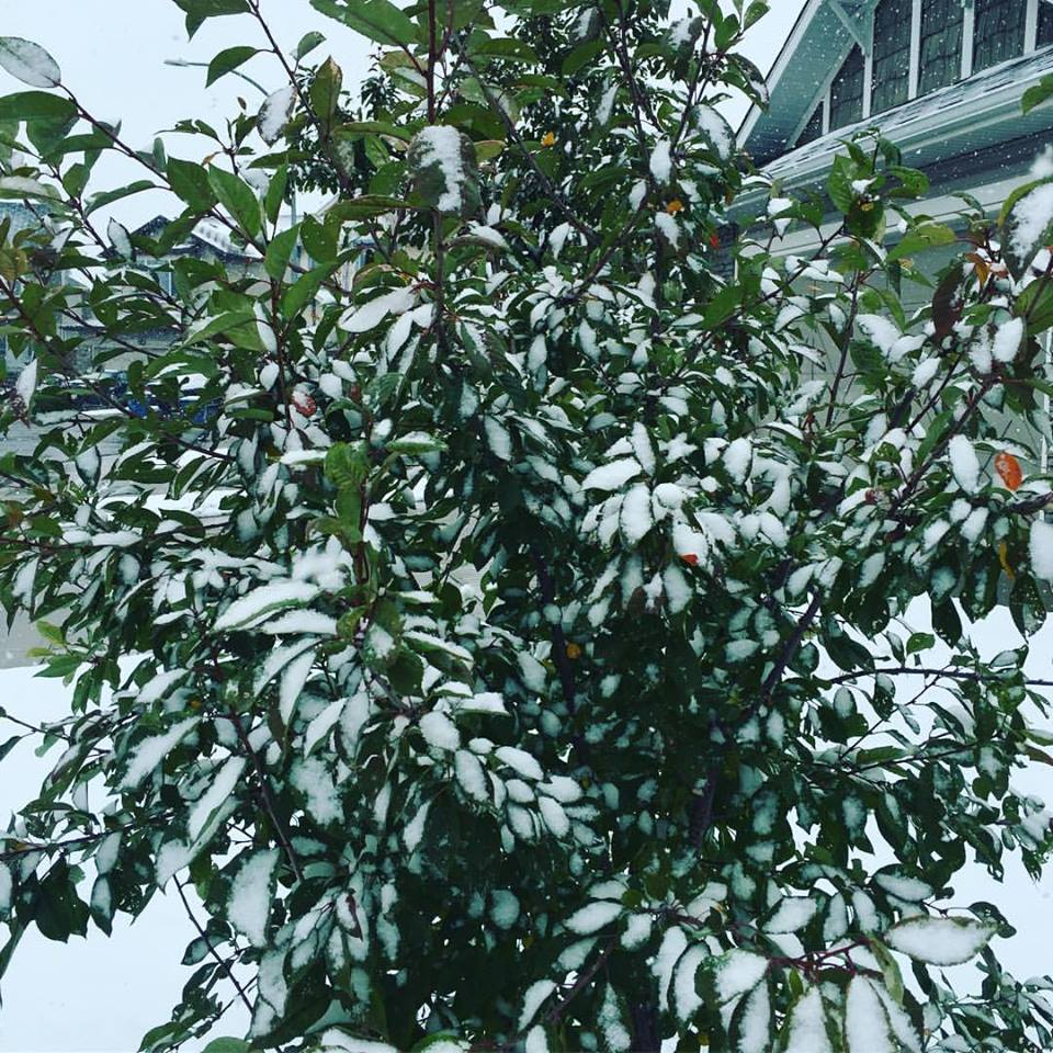 I Love The First Snowfall. The World Seems To Have…