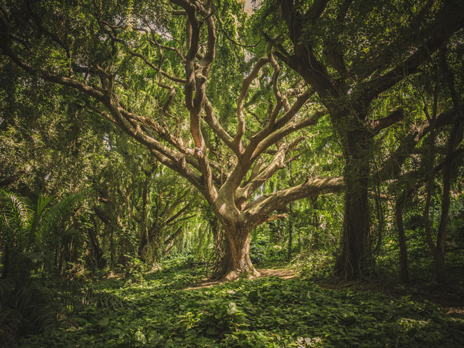 Broad-Tree-in-a-Grove