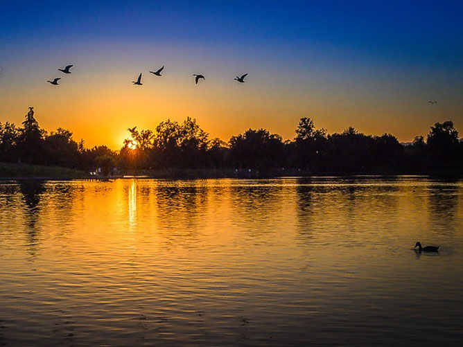 Geese-flying-in-the-sunset