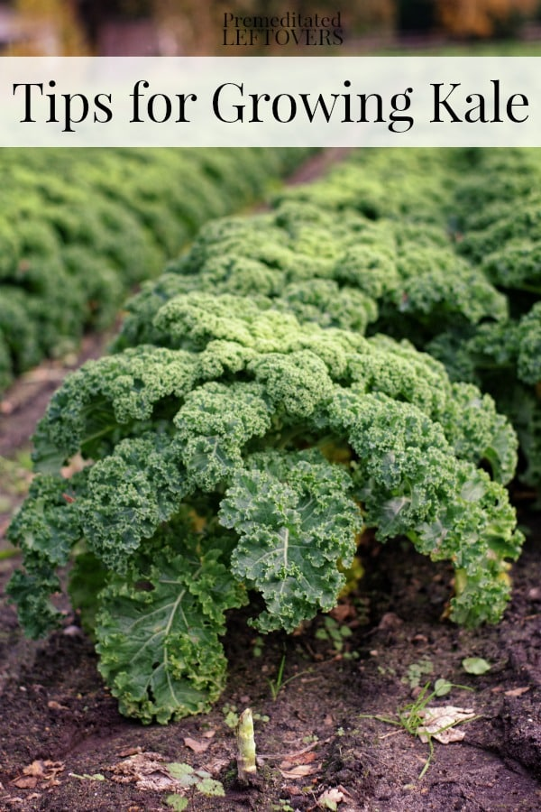 Image Result For Vegetable Plants That Can Be Grown In Pots