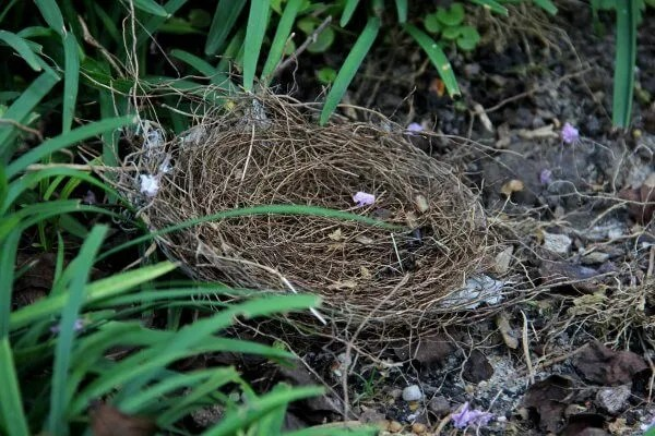 abandoned bird nest