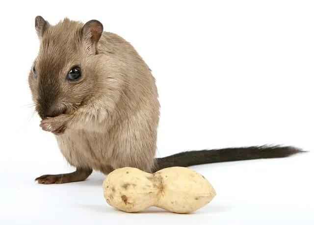 survival food plan pests