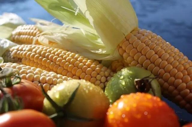 corn tomatoes seed catalogs