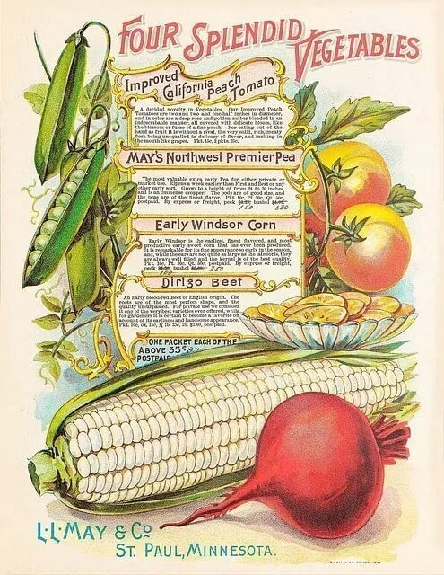 Snow and Seed Catalogs – Gardening In Winter