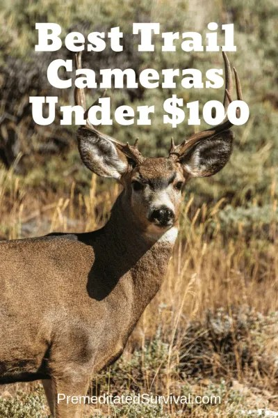 Best Trail Cameras Under $100
