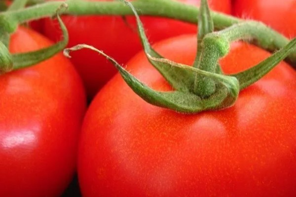 How to Grow Tomatoes – The Back to the Basics Guide