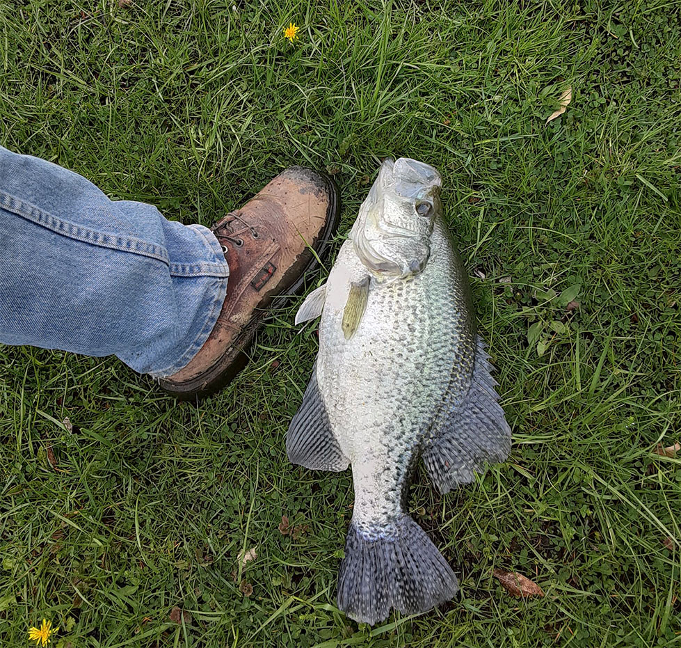 Whopper Indiana Crappie