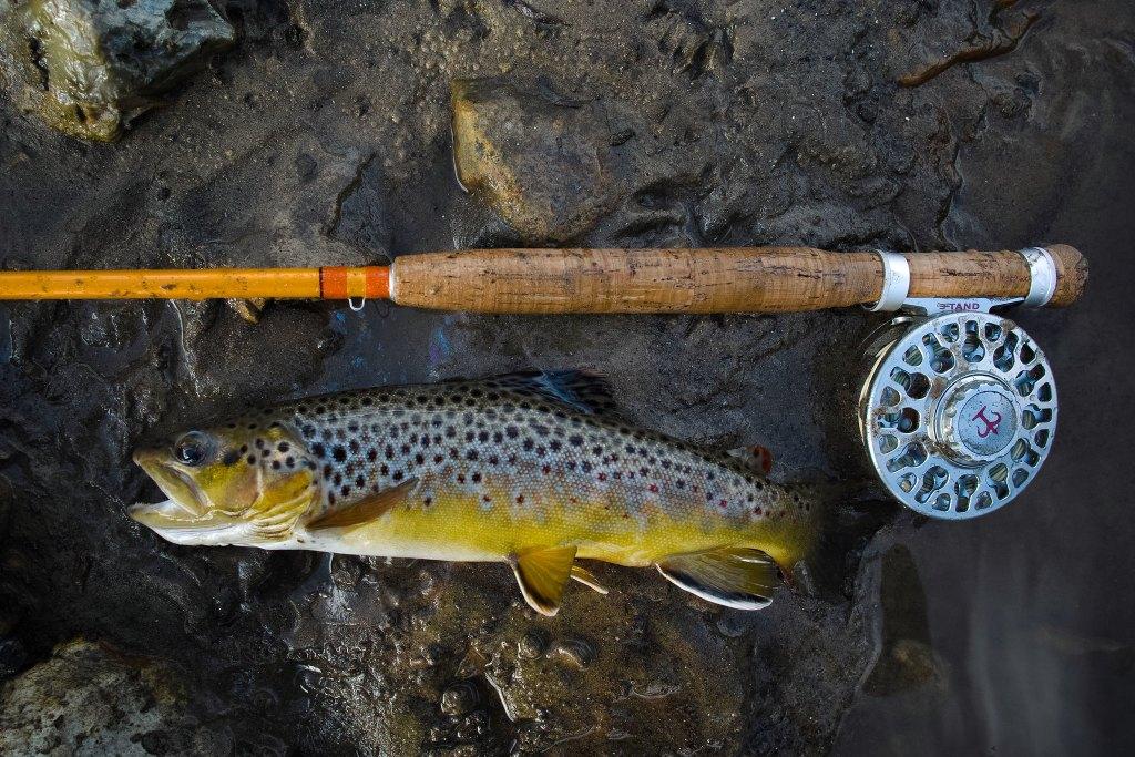 Catching Brown Trout Colorado River Arizona