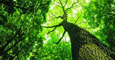 Arboricultural Association