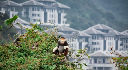 InterCon Resort Appointments Resident Zoologist to Protect Critically Endangered Monkeys