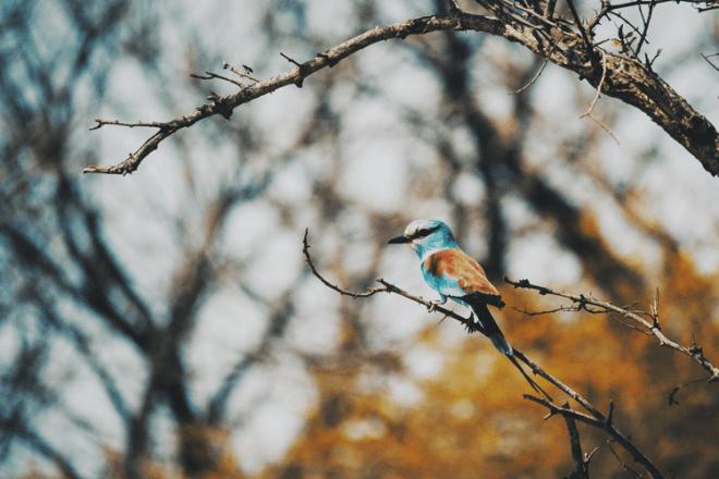 senegal_oiseau_reserve_bandia