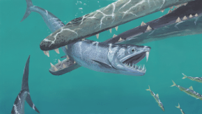 large_bodied_sabre_toothed_anchovies_by_hyrotrioskjan_ddx2pgf-pre