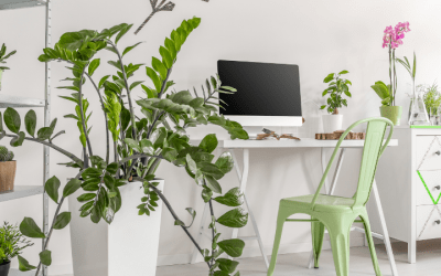 Will Commercial Window Tinting Kill All Your Office Plants
