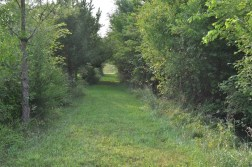 Twisted Tine Trails 4