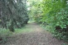 Twisted Tine Trails