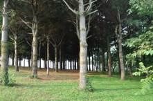 Twisted Tine Trees 3