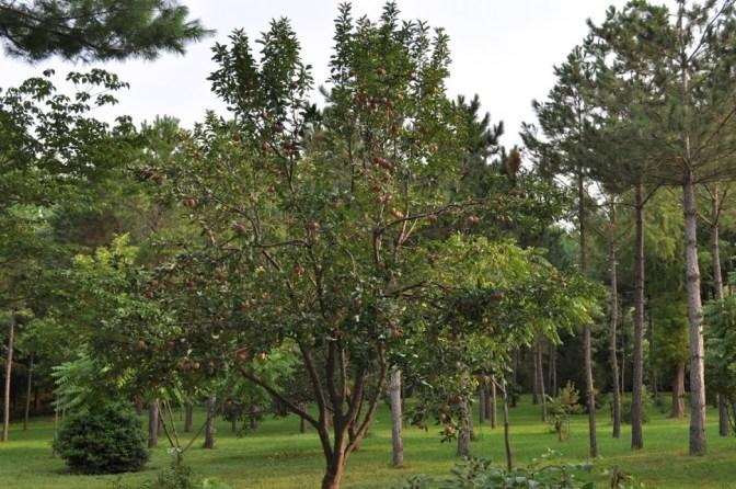 Twisted Tine Trees