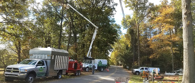 Tree Cutting Service Charlotte Nc