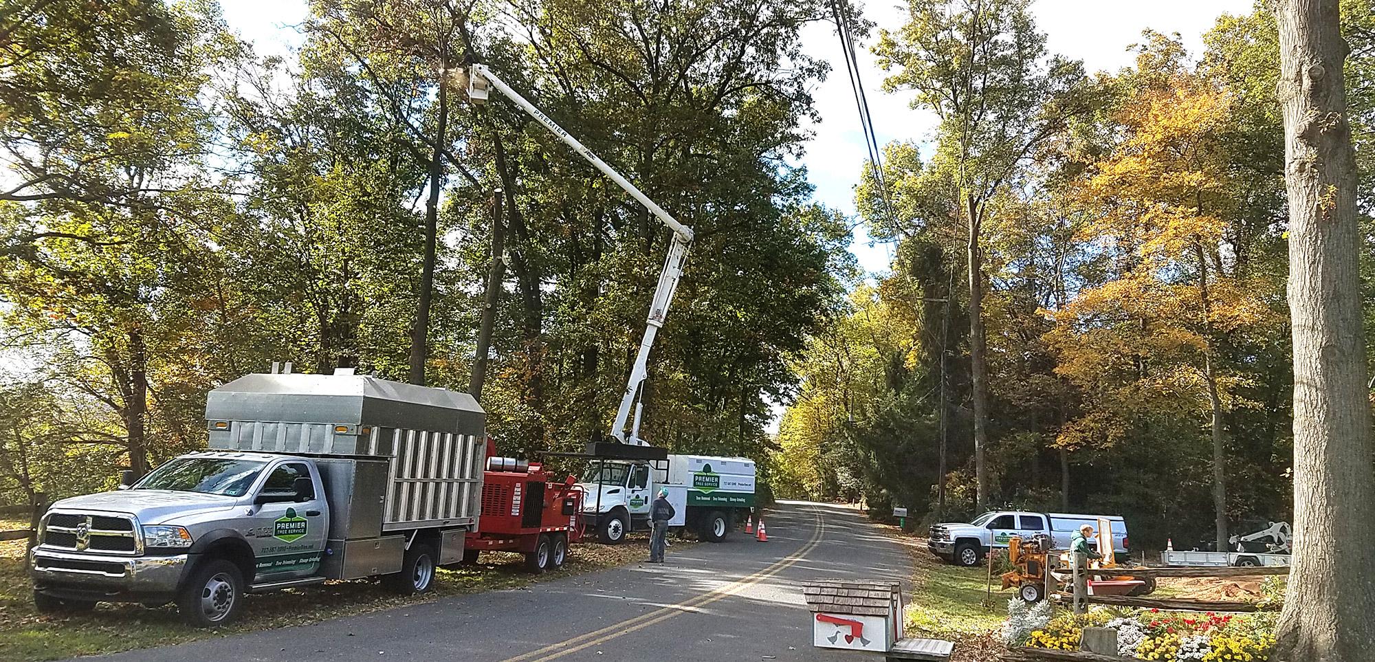 Tree trimming at work