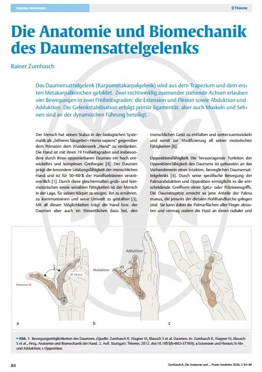 Die Anatomie und Biomechanik des Daumensattelgelenks