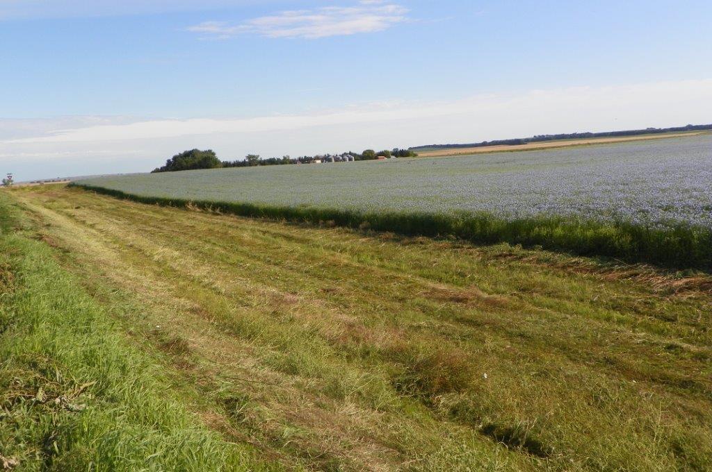 Flax Field 9