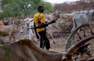 Herdsmen killing