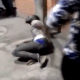 Nigerian student tied to pole and brutally beaten in India over alleged theft