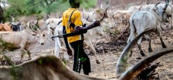 Suspected Fulani gunmen kill pregnant woman, rape others in Nasarawa