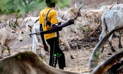 Suspected Fulani gunmen kill pregnant woman, rape others in Nasarawa