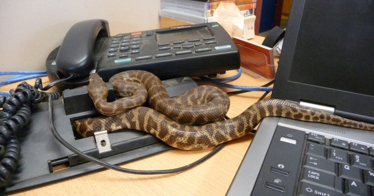 Black snakes chase President out of office