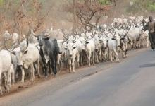 quit notice to herdsmen in Ondo forest reserves, Middle Belt group backs Akeredolu on quit notice to herdsmen in Ondo forest reserves, Premium News24