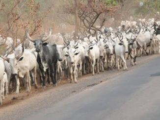 quit notice to herdsmen in Ondo forest reserves